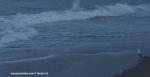 seagulls-sea-640