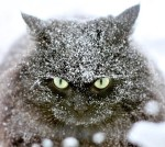 winter-is-coming-cat-in-snow